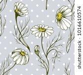 daisy wild flower vector... | Shutterstock .eps vector #1016610574