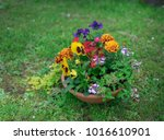 flowerpot in the garden.   Shutterstock . vector #1016610901