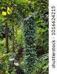 rainforest  far north... | Shutterstock . vector #1016624215