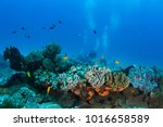 healthy and vibrant coral reef | Shutterstock . vector #1016658589