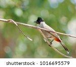 bird on branch. | Shutterstock . vector #1016695579