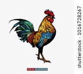 hand drawn rooster isolated.... | Shutterstock .eps vector #1016728267