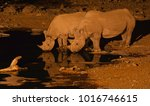 a black rhino mother and calf... | Shutterstock . vector #1016746615
