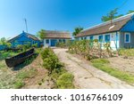letea  danube delta  romania ... | Shutterstock . vector #1016766109
