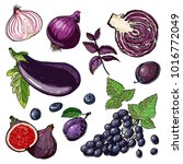 set of purple vegetables and...   Shutterstock .eps vector #1016772049