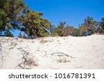wonderful beach of the island... | Shutterstock . vector #1016781391