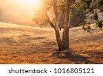 adelaide hills  south australia   Shutterstock . vector #1016805121