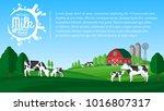 vector milk illustration.... | Shutterstock .eps vector #1016807317