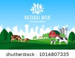 vector milk illustration with... | Shutterstock .eps vector #1016807335