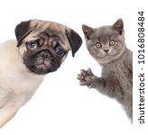 Stock photo peeking cat and dog isolated on white background 1016808484