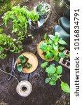 spring garden. seedlings in... | Shutterstock . vector #1016834791