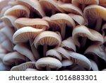 wood mushrooms. yellow fungi on ...   Shutterstock . vector #1016883301