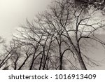 treetop with the sky in the... | Shutterstock . vector #1016913409