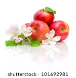 Apple Flowers And Ripe Red...