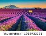 Majestic Colorful Lavender...