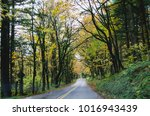 driving in the pacific north... | Shutterstock . vector #1016943439