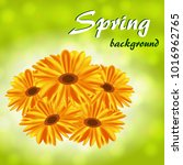 abstract spring background with ... | Shutterstock .eps vector #1016962765