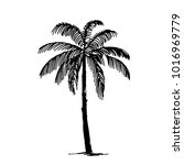 palm tree illustration | Shutterstock .eps vector #1016969779