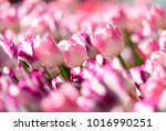 amazing nature concept of white ... | Shutterstock . vector #1016990251