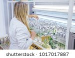 female scientist in white robe... | Shutterstock . vector #1017017887
