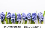 flowers composition with lilac...   Shutterstock . vector #1017023047