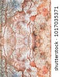 Small photo of tree bark texture pattern. wood rind for background with copy space add text