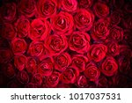 natural red roses background | Shutterstock . vector #1017037531