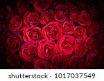 natural red roses background | Shutterstock . vector #1017037549