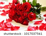 natural red roses background | Shutterstock . vector #1017037561