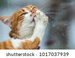cute white and red cat clean... | Shutterstock . vector #1017037939