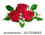red rose. isolated with a white ... | Shutterstock . vector #1017038065