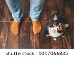 domestic life with pet. playful ... | Shutterstock . vector #1017066835