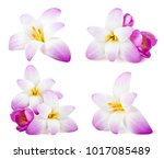 Stock photo set of elegance flowers isolated on white background 1017085489