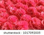red roses background  handmade...   Shutterstock . vector #1017092035