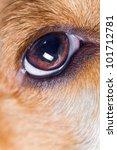 Eye Of A Dog   Macro Shot.