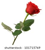 Red Rose. It Is Isolated On A...