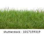 grass isolated on white...   Shutterstock . vector #1017159319