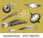 onion hand drawn vector set.... | Shutterstock .eps vector #1017182251