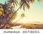 beautiful tropical pacific... | Shutterstock . vector #1017182311