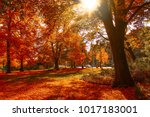 in a park red trees  sun... | Shutterstock . vector #1017183001