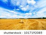 Haystacks Field And Beautiful...