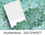 blank postcard or brochure...   Shutterstock . vector #1017196927