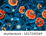 bright and colorful flowers... | Shutterstock . vector #1017245269