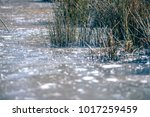 frozen in ice shcrubs on a... | Shutterstock . vector #1017259459