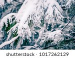 evergreen plants covered in... | Shutterstock . vector #1017262129