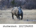 rhino running on grass plain in ... | Shutterstock . vector #1017296905