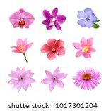Set Tender Pink Flowers Isolated - Fine Art prints