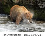 large male grizzly bear eating... | Shutterstock . vector #1017324721