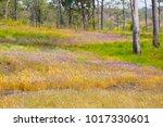 Utricularia Delphinioides And...