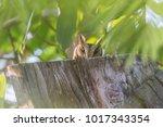 owl or owl or owl strigiformes... | Shutterstock . vector #1017343354